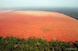 FLI illegal-deforestation-for-soy-2