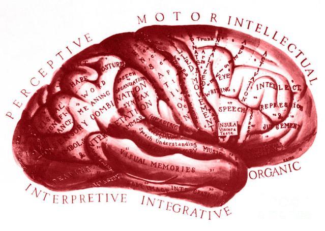 FLI Brain Historical