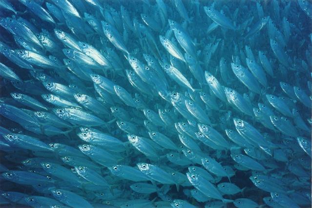 FLI School of fish