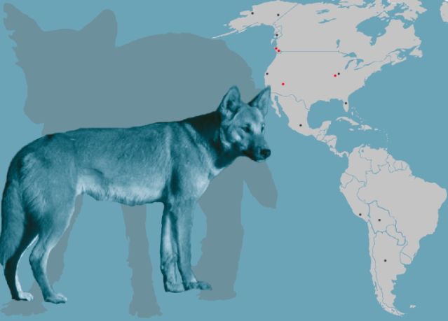 FLI Dogs Study of dogs in the Americas