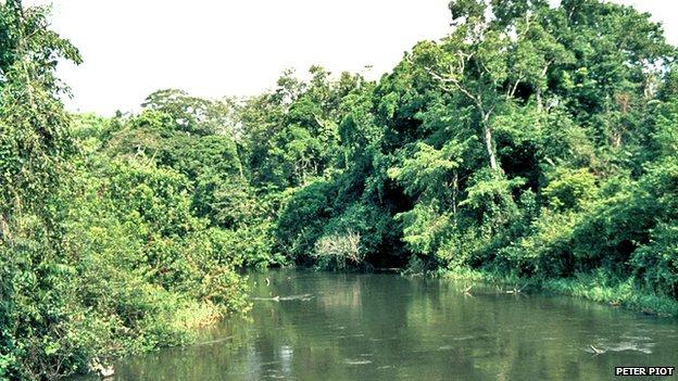 FLI Ebola river Piot 1976