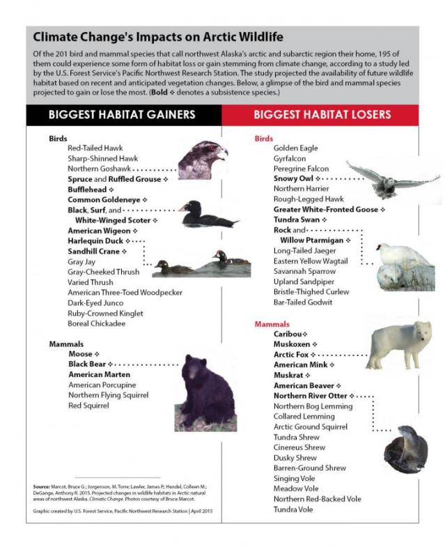 Of the 201 bird and mammal species that call northwest Alaska's arctic and subarctic region their home, 195 of them could experience some form of habitat loss or gain stemming from climate change, according to a study led by the US Forest Service's Pacific Northwest Research Station. The study projected the availability of future wildlife habitat based on recent and anticipated vegetation changes. Here, a glimpse of the bird and mammal species projected to gain or lose the most. (Bold denotes a subsistence species.) Credit: US Forest Service, Pacific Northwest Research Station. Photos courtesy of Bruce Marcot, USFS.