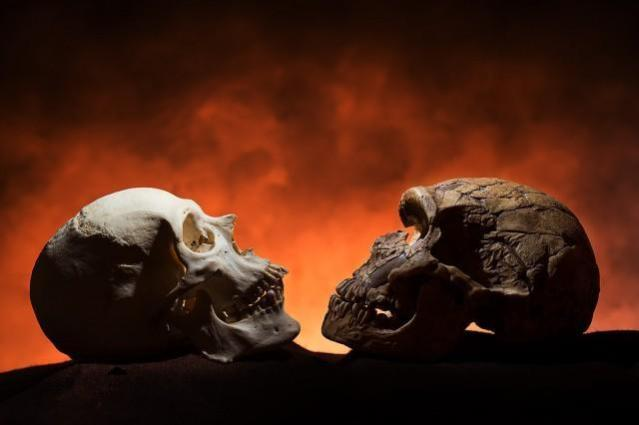 Notice how the modern skull, on the left, has a point at the bottom of the face compared to the Neandethal-era skull on the right. The reason: Only modern humans have chins. Credit: Tim Schoon, University of Iowa