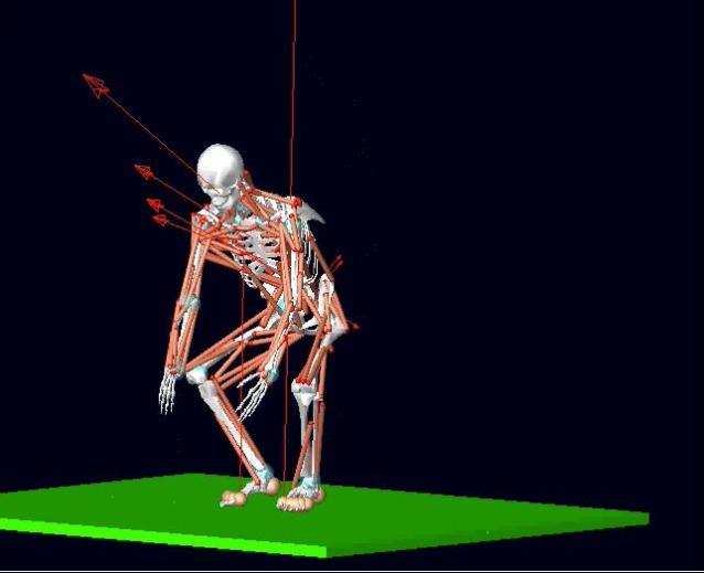 """Empa calculates the force distribution in the back with the aid of the program """"Open Sim"""" developed by Stanford University. Credit: Empa"""