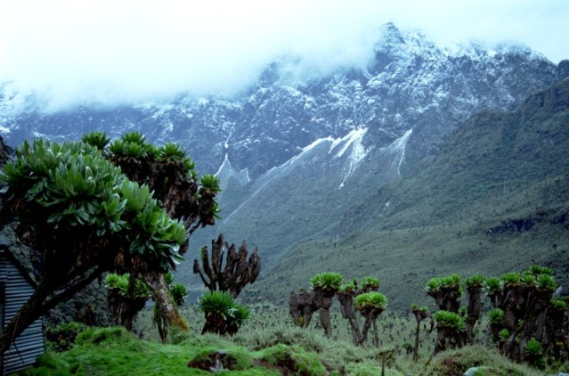 FLI Rwenzori Mountains