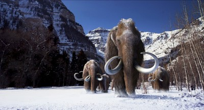 Wooly Mammoths Credit: Image courtesy of Giant Screen Films ©2012 D3D Ice Age, LLC