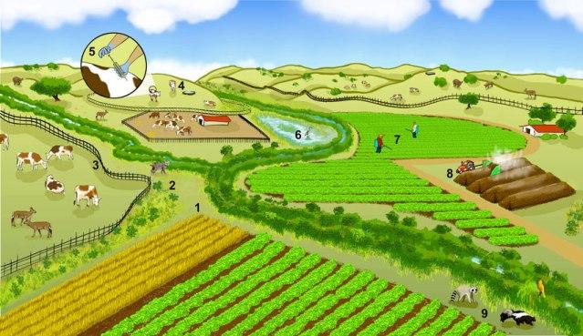 farmingl andscape