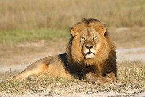 FLI Cecil 1