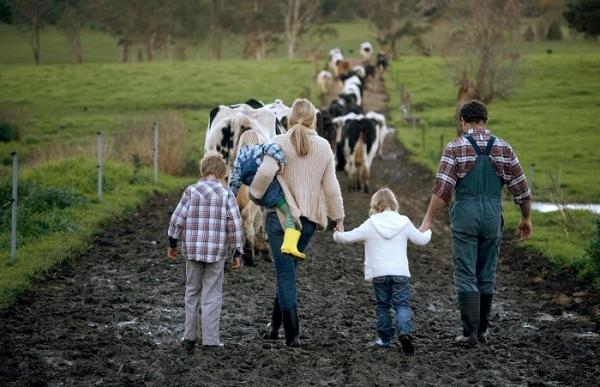 FLI dairy farm