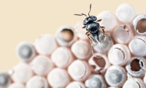 FLI wasp 2