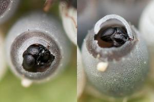 FLI wasp 3