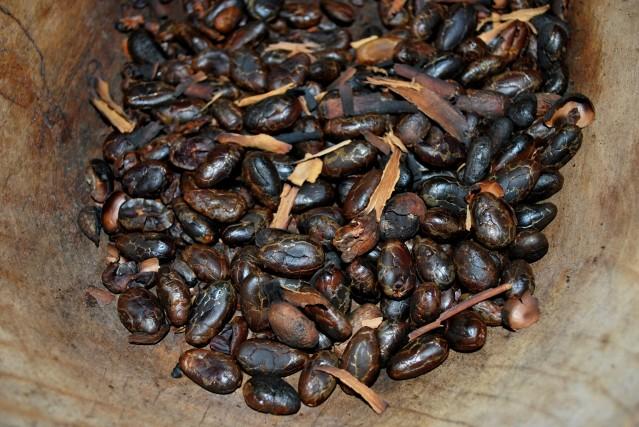 FLI Cacao Chonita14