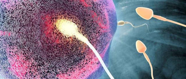 FLI Natural-fertilization-egg-sperm-union