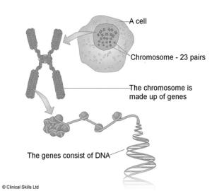 FLI_dna_chromosomes_genes