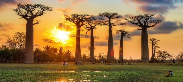 FLI 2016-Madagascar-Africa-Classic-Madagascar