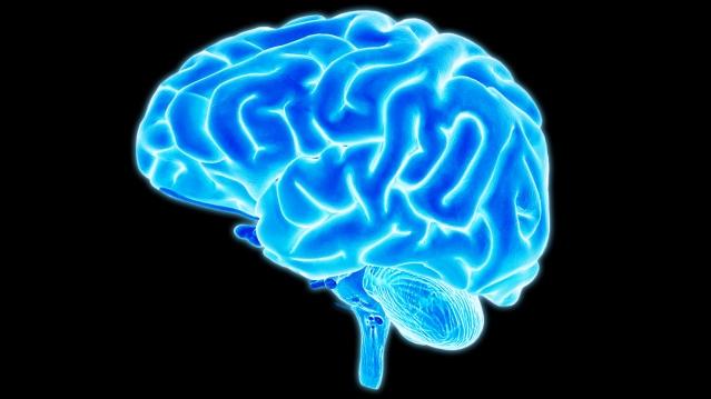 FLI Brain 4