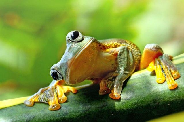 FLI frog Berkeley