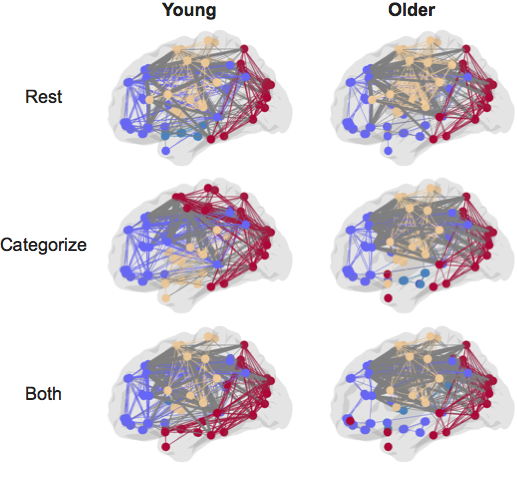 FLI nodes-and-edges-brain-memory-tasks