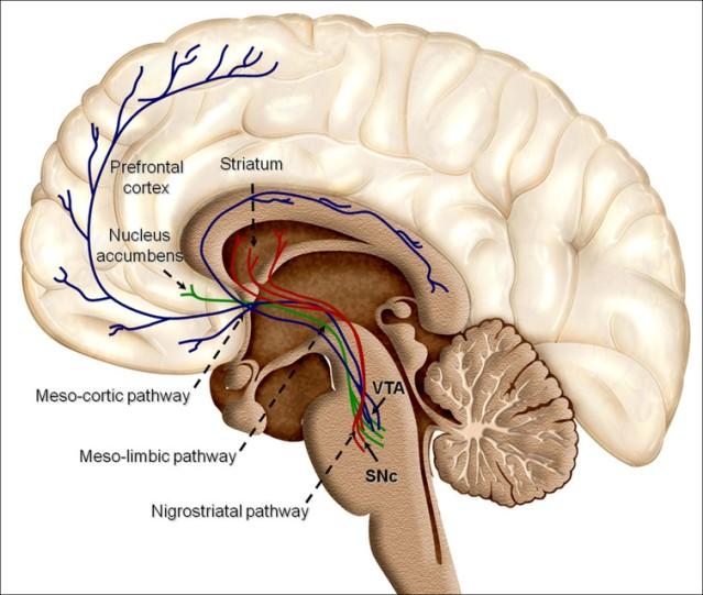 fli-brain