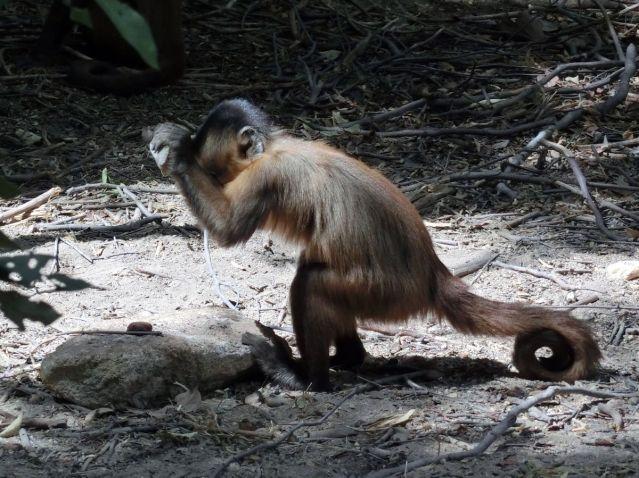 fli-stone-monkey