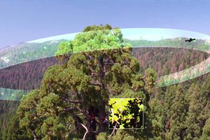 fli-3dsequoia