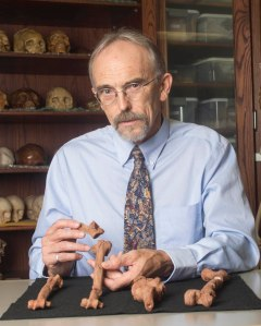 UT Austin professor John Kappelman with 3D printouts of LucyÕs skeleton illustrating the compressive fractures in her right humerus that she suffered at the time of her death 3.18 million years ago. (Photo by Marsha Miller/UT Austin)