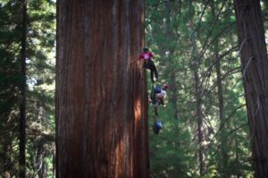 fli-students-climb-sequoia