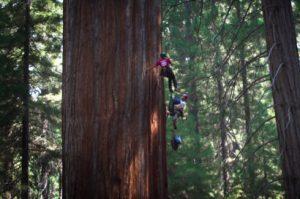 fli-students-climb-sequoia