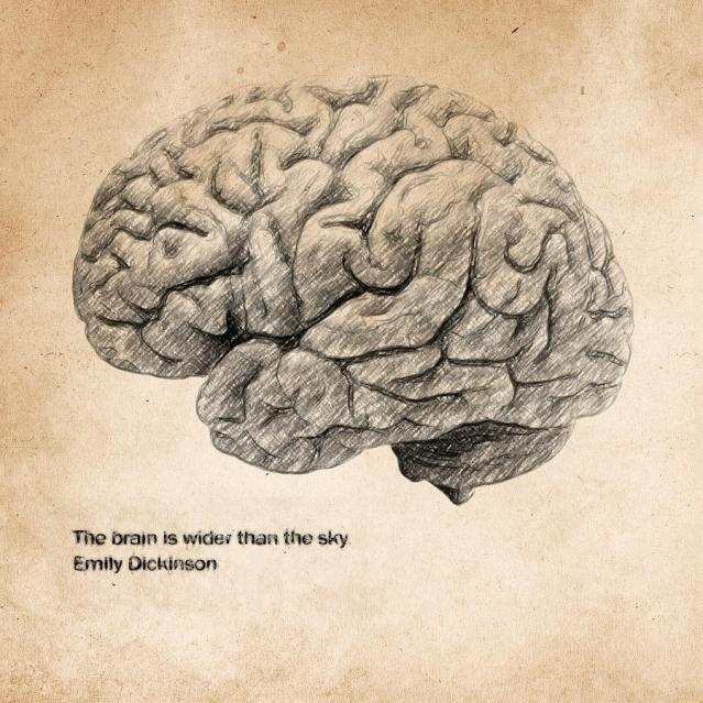 fli-the-brain-is-wider-than-the-sky