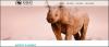 fli-adopt-a-rhino