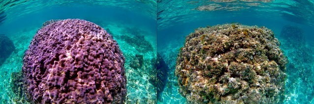 Hawaii_coral_comp