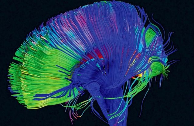Neural-pathways-in-the-brain